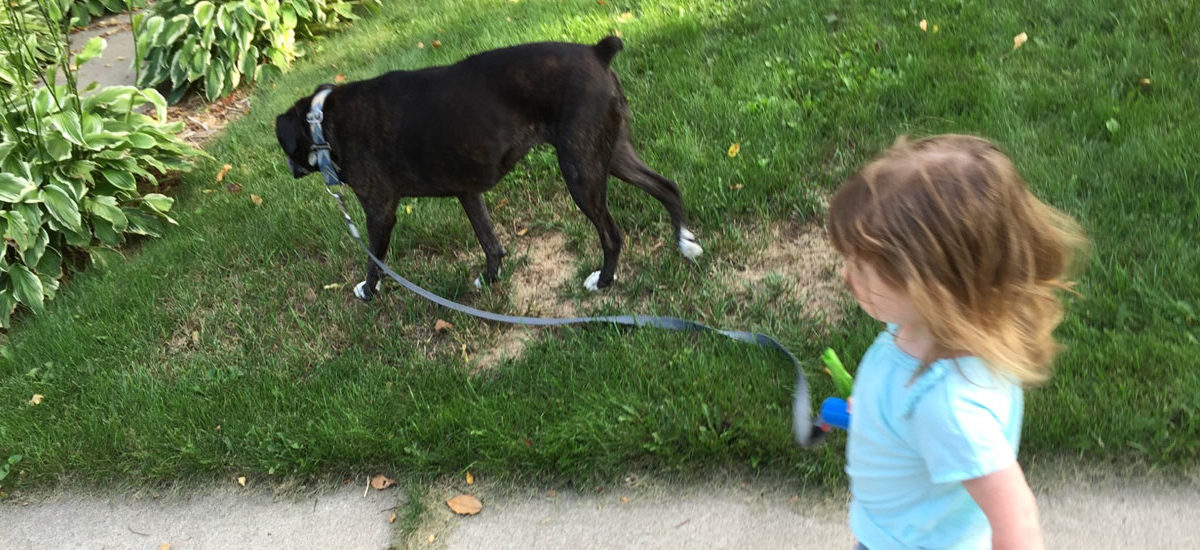 child walking a dog