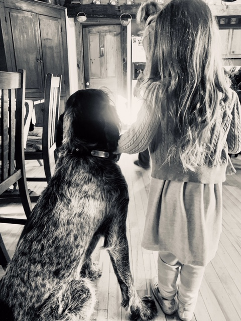 Spinone Italiano with little girl