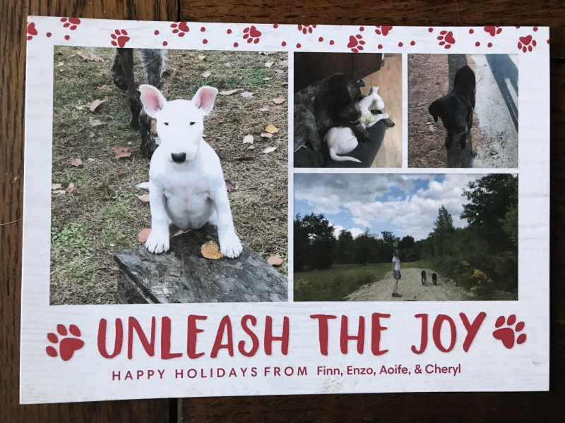 Holiday greeting card with Bull Terrier, Chocolate Labrador, and Spinone Italiano